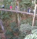 treetop walk at                                   Green Mountains