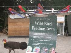 wild bird feeding                                       area
