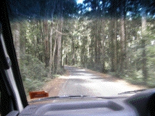 drive                                                           through                                                           forest