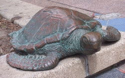 marine                     turtle sculpture at Gold Coast